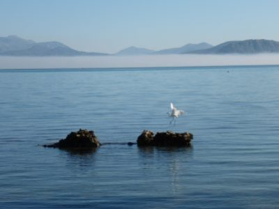 Heron in the bay of Argos