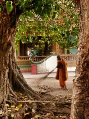 Every monk in every temple we've stayed in starts their day by sweeping