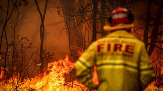 Bushfire relief: How you can help those in need
