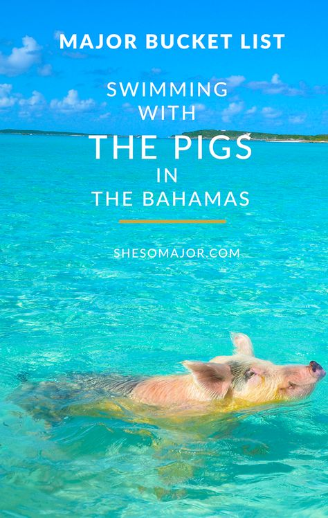 Bucket List: Swimming With The Pigs - The Bahamas