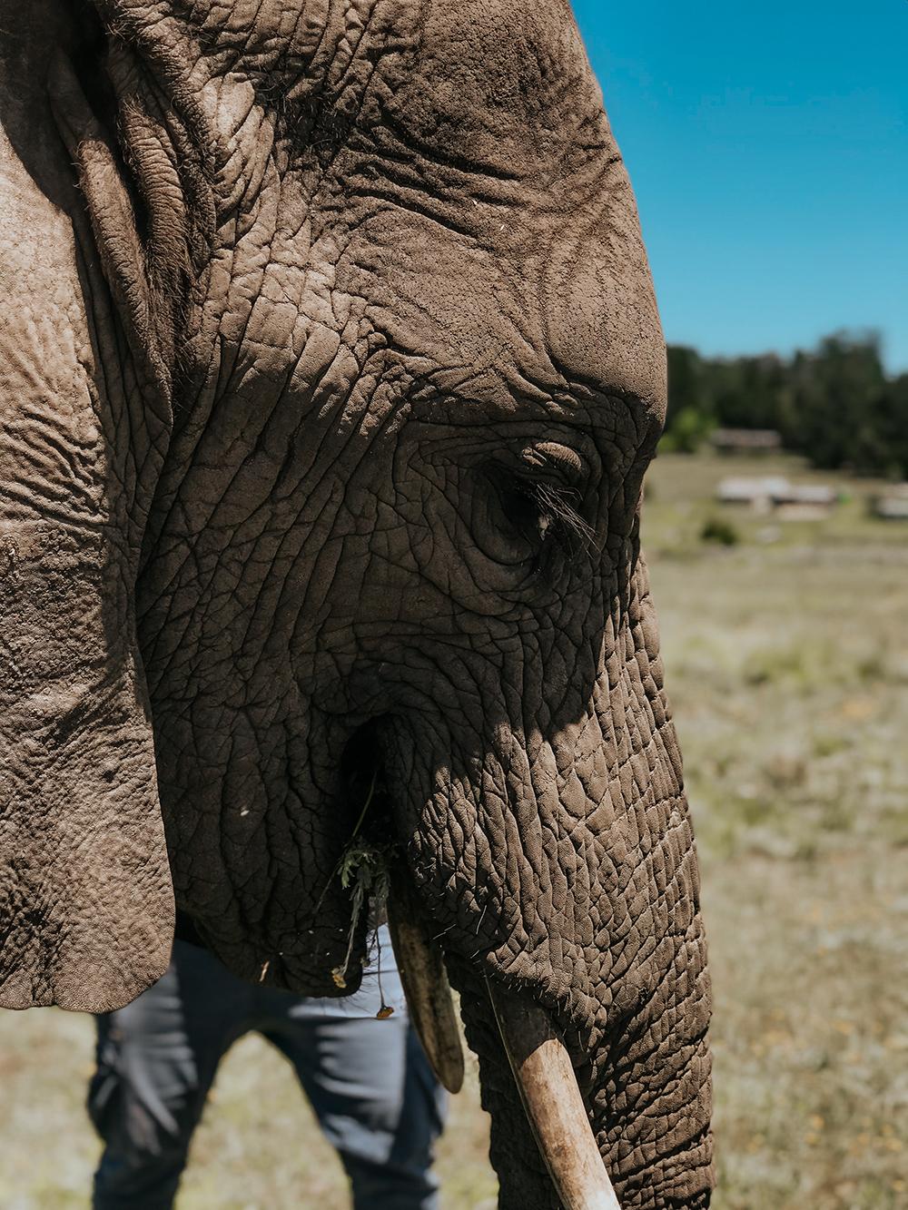 Walking With Elephants |SHESOMAJOR35a