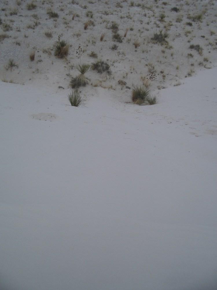 Sandboarding White Sands National Monument and Missile Range (5/6)