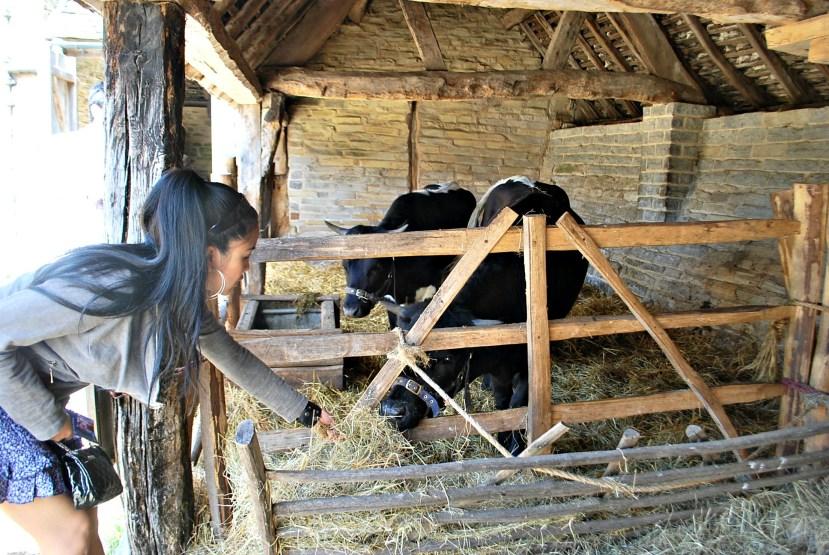 250711 4714 Mary Arden's Farm