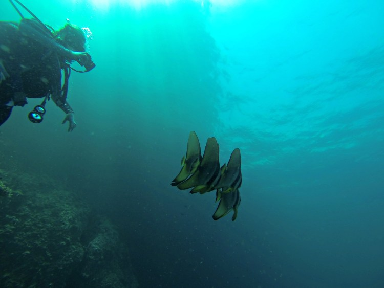 Koh Doc Mai - Scuba Diving in Phuket/Phi Phi - www.shewalkstheworld.com
