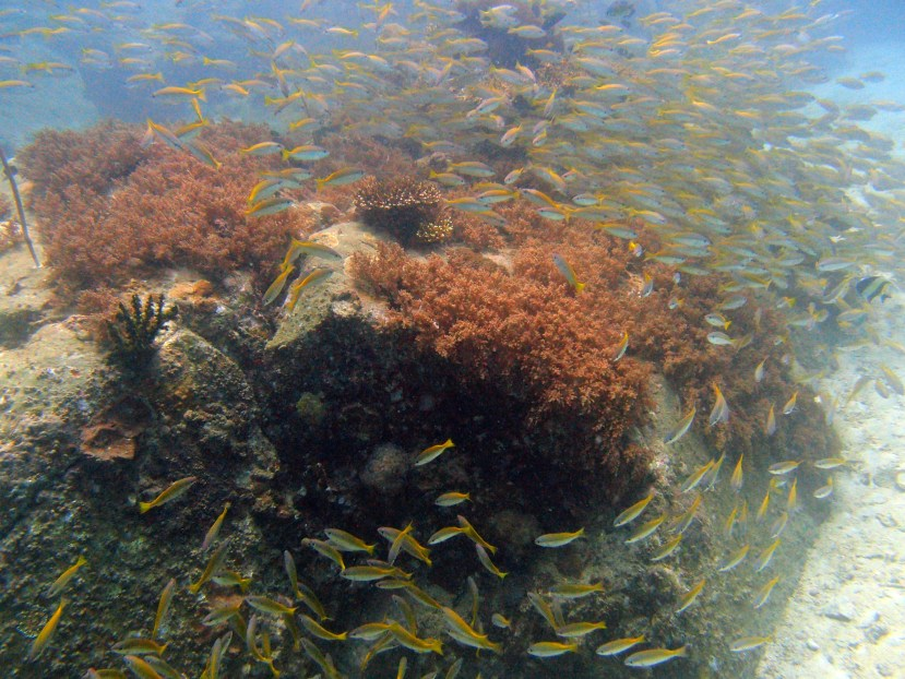 Koh Lipe Diving