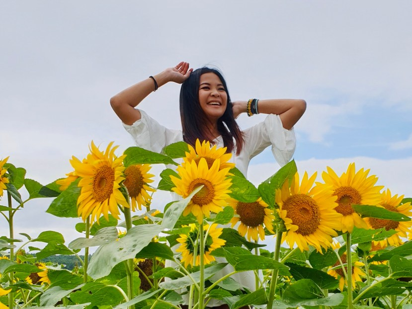 Hokuryu Sunflower Fields