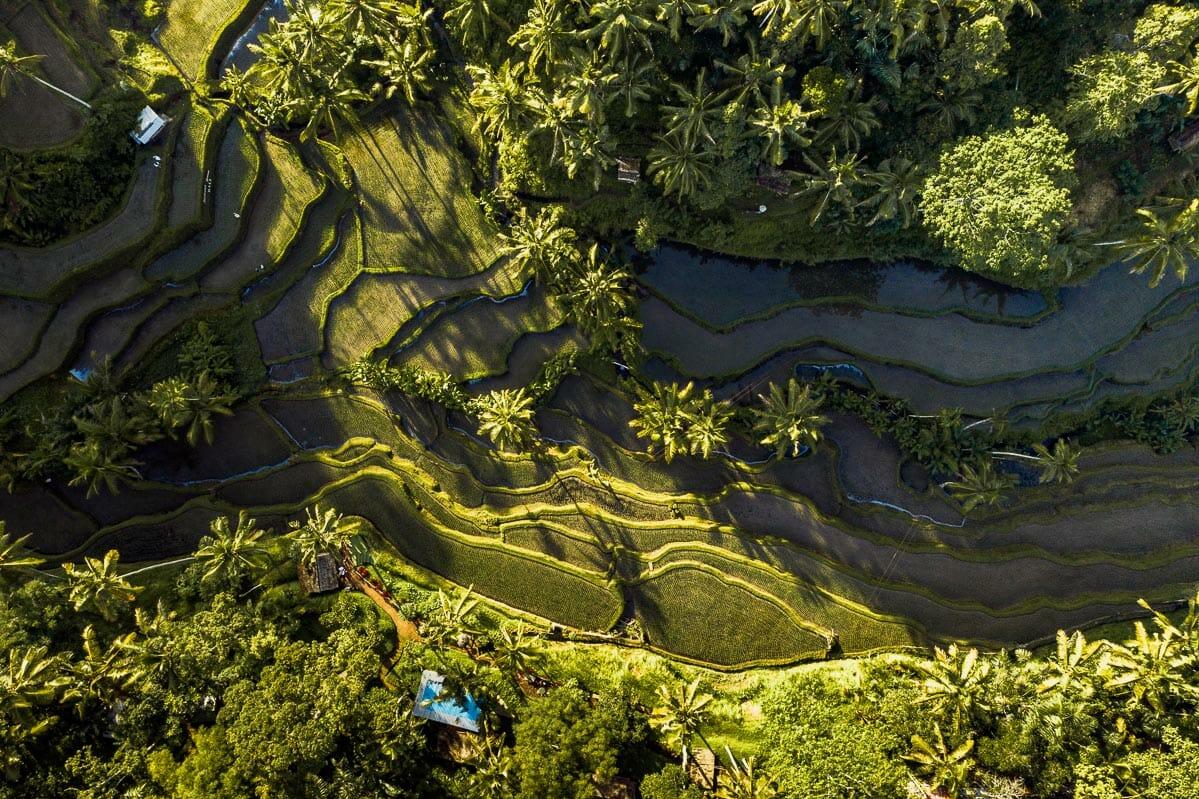 Drone shot of the Tegallalang Rice Terraces near Ubud, Bali