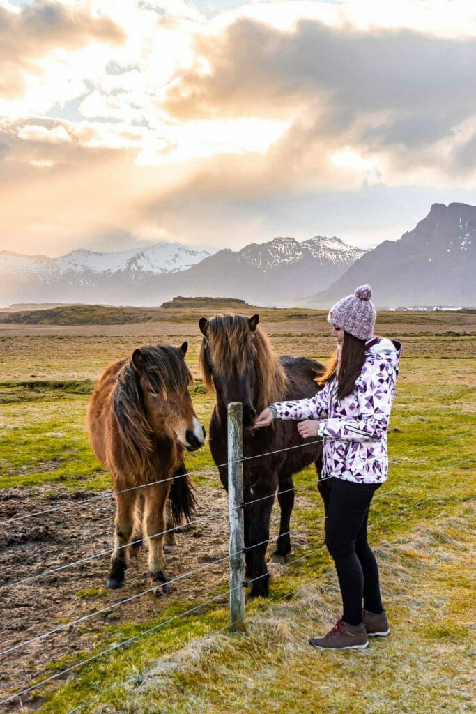 Girl with two Icelandic horses in Iceland