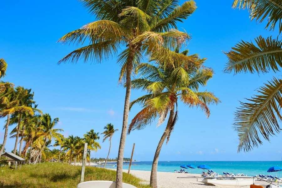 Palm trees at Key West, USA