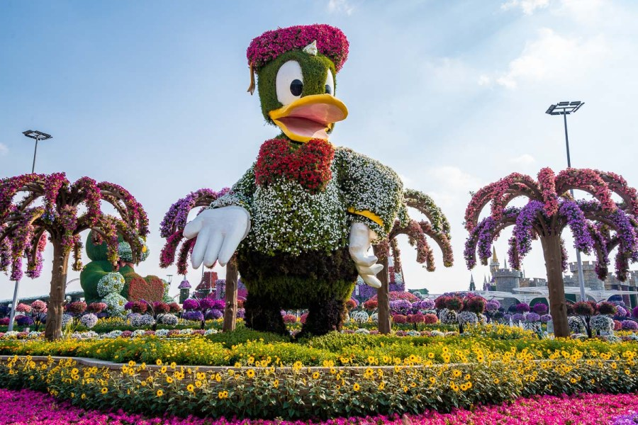Statue of Donald Duck made of flowers in the Dubai Miracle Garden