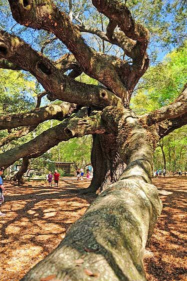 angel oak charleston sc
