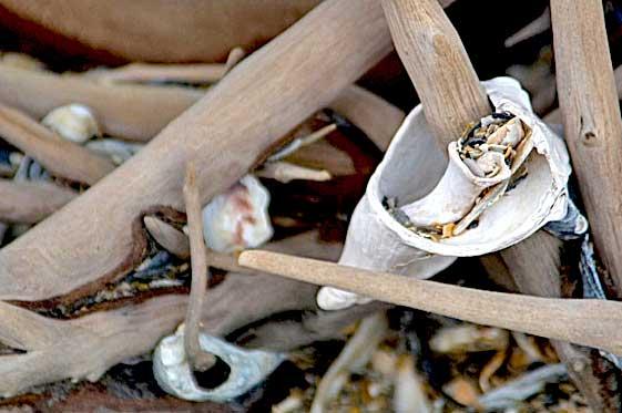 shells in botany bay beach sc