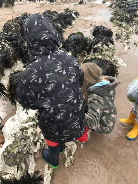 Identifying seaweeds