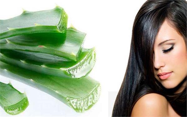 Aloe vera for hair care