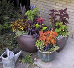 container-garden1