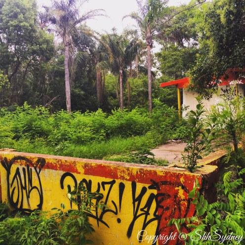 paint & palms