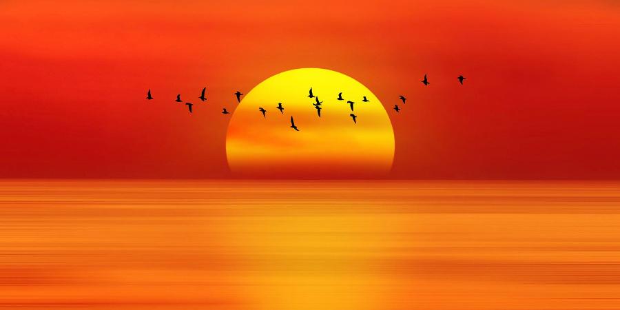 Летящие над морем птицы на фоне заходящего солнца