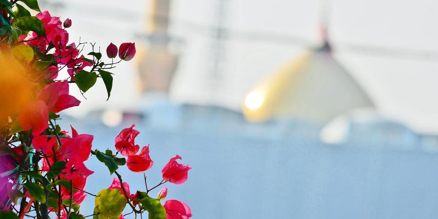 Цветы на фоне купола харама Имама Хусейна, Кербела, Ирак