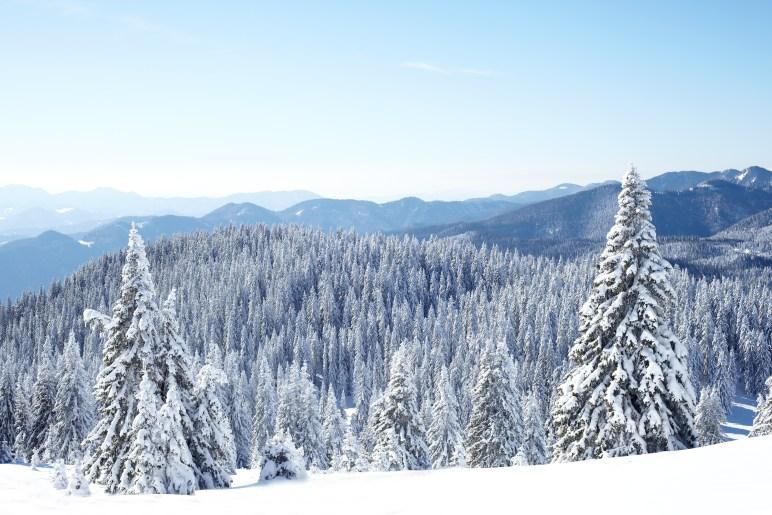 foret sous la neige