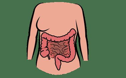 pixabay_gratuit_dessin_intestin_intestine-2970172_1280