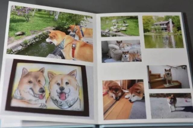 柴犬の写真と似顔絵