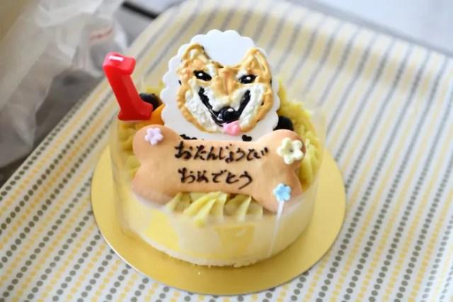 犬用お誕生日ケーキ