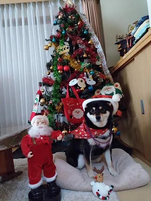 さきちゃんとクリスマスツリー