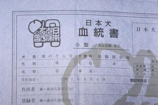 そら君の日本犬保存会血統書
