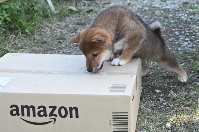 アマゾンの箱と柴犬の子犬