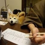③伊豆修善寺「絆」に泊まる!美味しい懐石料理に飼い主も柴犬まるも感動!?