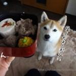 柴犬まるに犬のご飯とケーキのドッグダイナーの「おせち」を買ってみました!