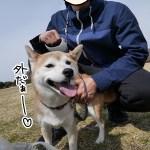 天気のいい日は柴犬まると昭和記念公園を思いっきり走り回る。