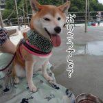 西伊豆の釣り堀「フィッシングパークTOI」に柴犬まるといってきました!