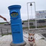 柴犬まると「海の駅九十九里(いわし交流センター)」に行ってきました!