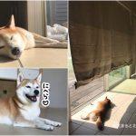 九十九里のおしゃれなドッグコテージ「波の音」に柴犬まると泊まってきました!