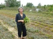 Yoshiko gathers plants for natural dye! Photo courtesy of Andrew Galli