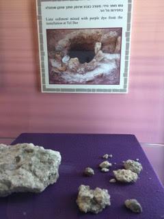 Murex sherds at Tel Dor Museum