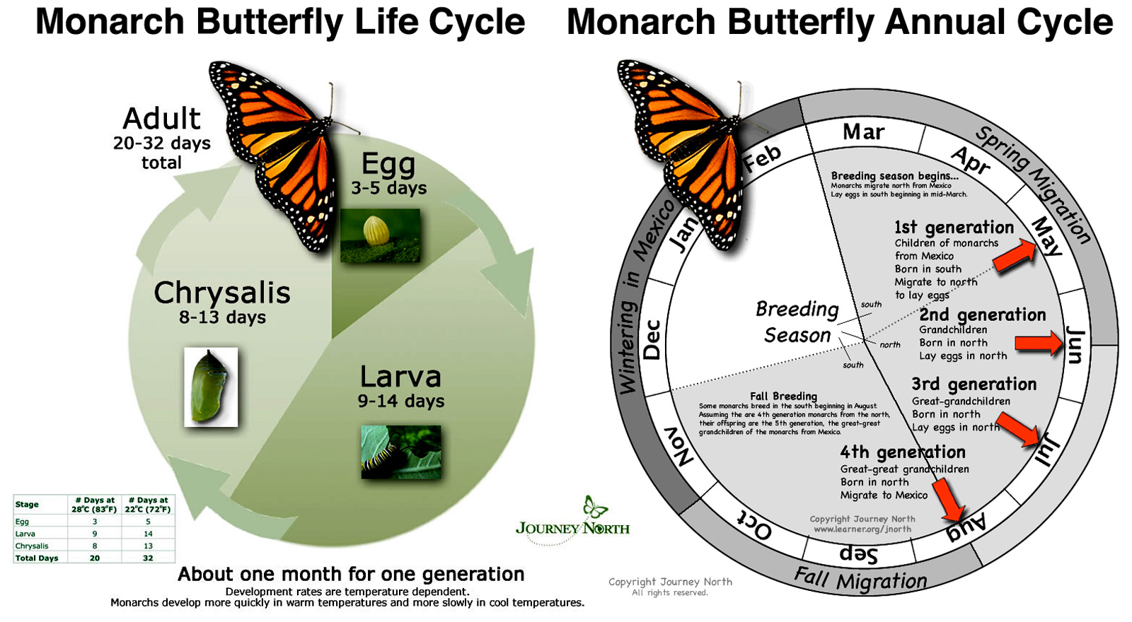 Life Cycle Of A Butterfly Video