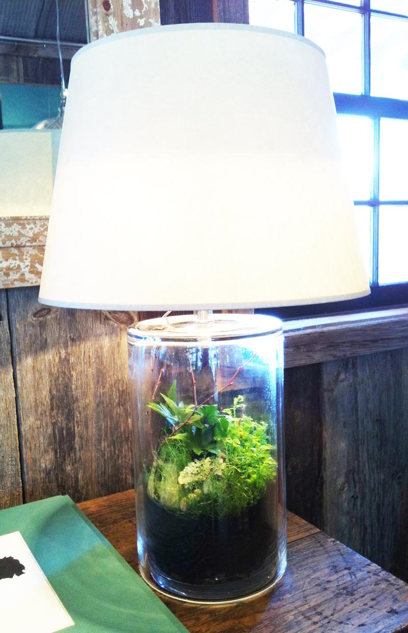 Terrarium Lamp Etc.