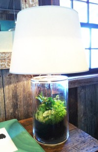 Terrarium Lamp Etc.