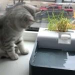 『わらび』という名の猫の物語〜覗き魔篇〜