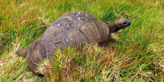 en yaşlı kaplumbağa