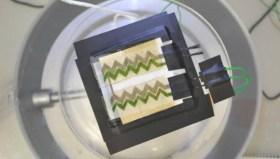Fotosentez yapan duvar kağıdı geliştirildi!