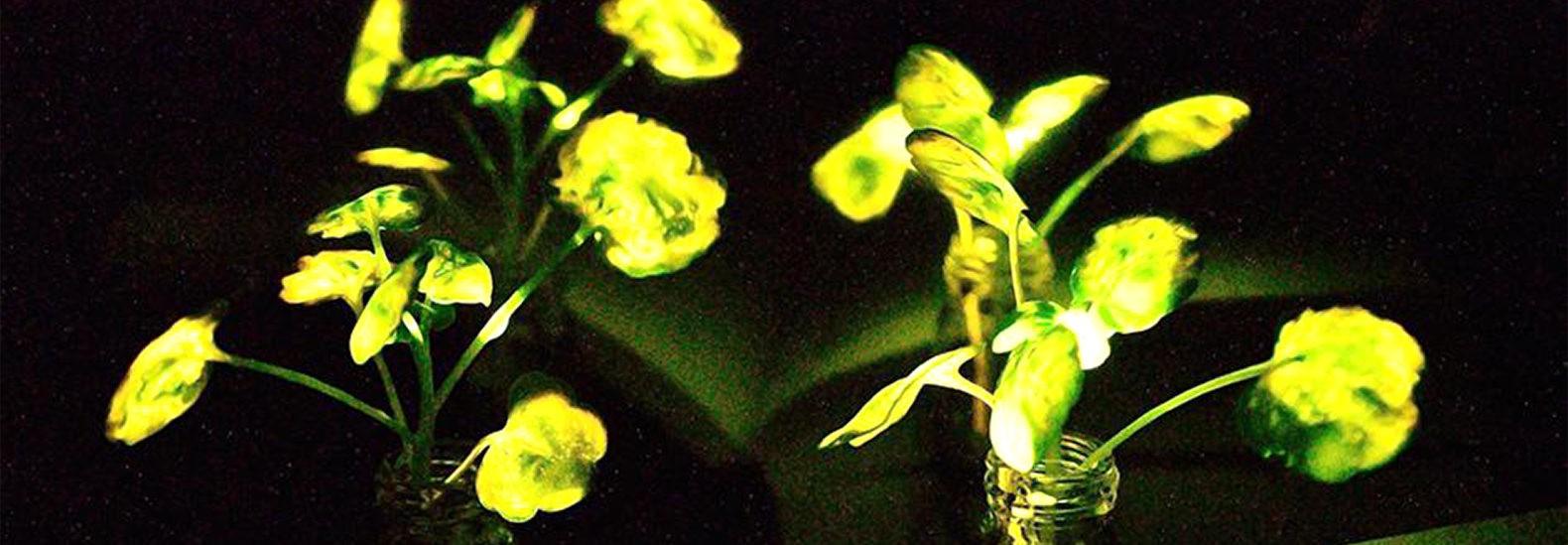 parlayan canlı bitkiler