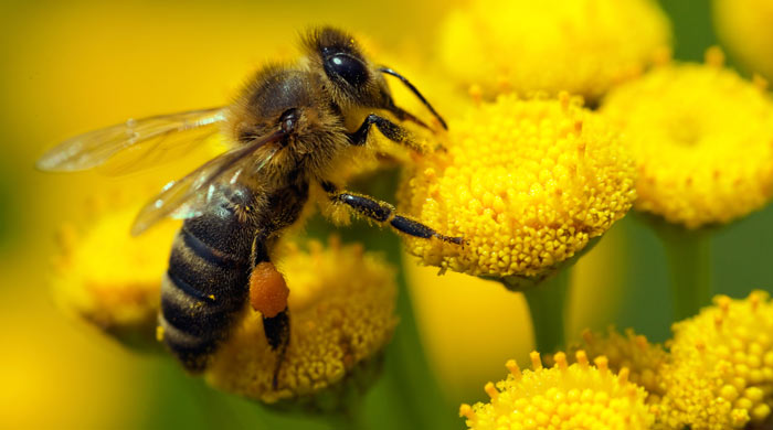 arılar matematik sdn 2