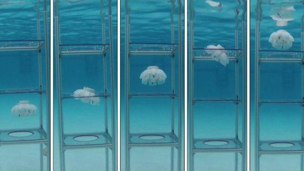 Robot denizanaları