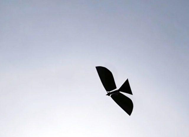 drone robo-raven