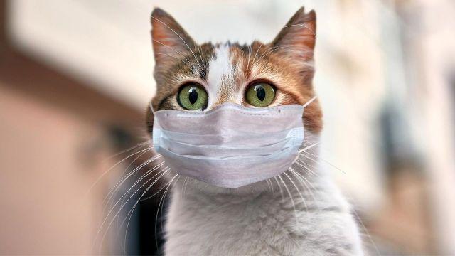 corona-virusu-kedilere-bulasiyor-00