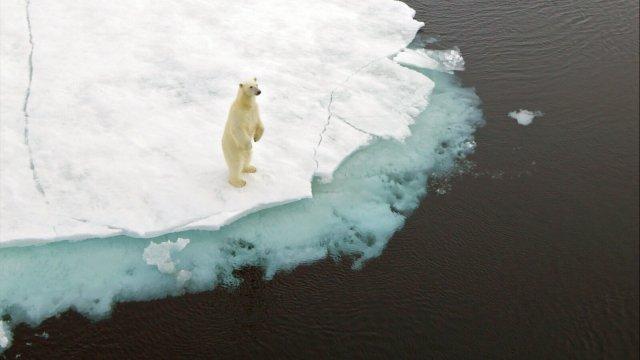 iklim değişikliği yasası