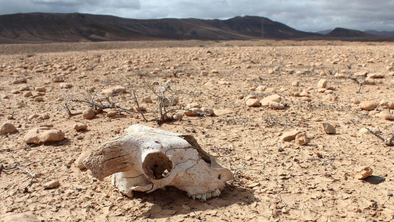 Altıncı kitlesel yok oluş ve iklim krizi.